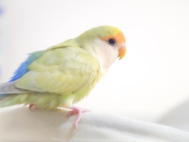 鳥と暮らし